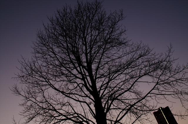 simplest tree