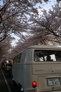 桜と君とワーゲンと3