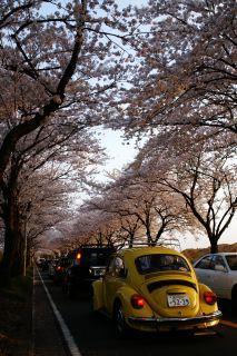 桜と君とワーゲンと2