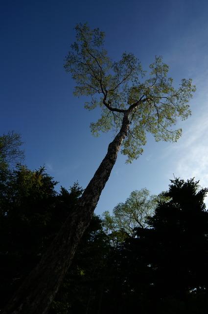 深呼吸の樹