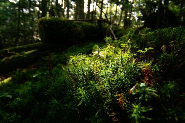 北八ッの森
