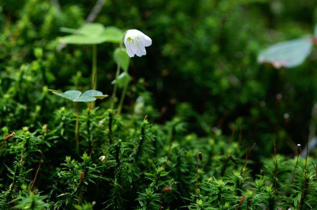 小さな森のプリンセス