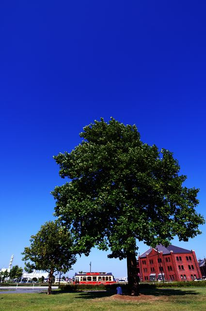 sunshade tree I